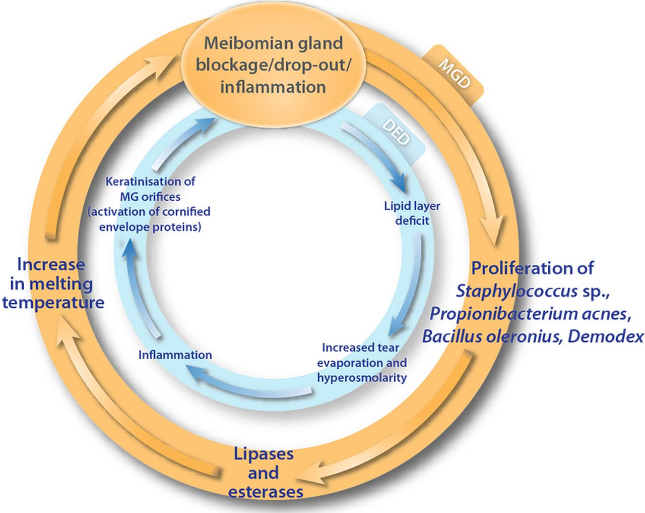 Revisiting The Vicious Circle Of Dry Eye Disease A Focus On The